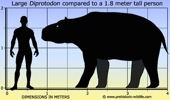 Caption: Diprotodon Australis size comparison.