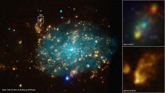 NGC 7793. Credit: X-ray (NASA/CXC/Univ of Strasbourg/M. Pakull et al); Optical (ESO/VLT/Univ of Strasbourg/M. Pakull et al); H-alpha (NOAO/AURA/NSF/CTIO 1.5m)